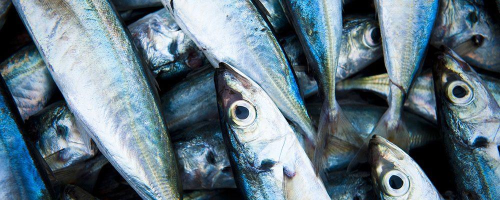 Pymes panameñas del sector pesquero se actualizan sobre mercado europeo